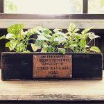100均の観葉植物のアレンジ!おしゃれな植え替えの方法を紹介!